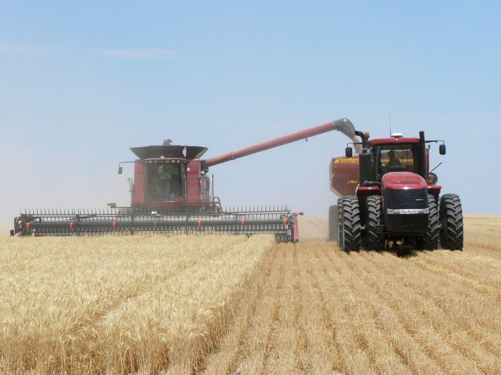 Producţia agricolă de la noi e de excepţie în acest an