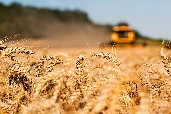 Trei sferturi din grâu merge la export, în timp ce România importă pâine congelată.